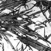 Мартенсит и мартенситные трансформации в полиморфных материалах